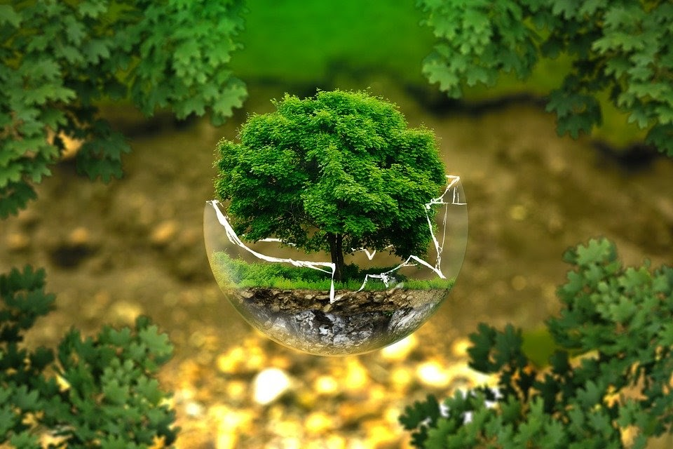 A tree in a cracked glass globe surrounded by trees