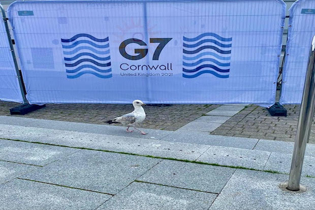 seagull next to G7 sign